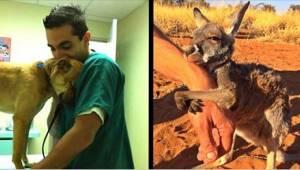 12 dyr, der er meget taknemmelige for deres redningsmænd!