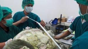 Skildpadden blev opereret omgående efter en konsultation på dyrlægernes skadestu