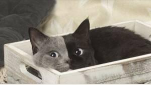 Da den blev født, vakte dens ansigt voldsom opmærksomhed! Se katten med de to an