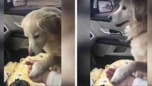 Hundens reaktion på at være taget ud af et internat efter at hans ejer døde er u