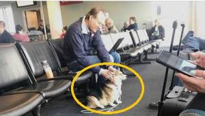 Tæven nærmer sig en fremmed i lufthavnen. Der er en særlig grund til dette.