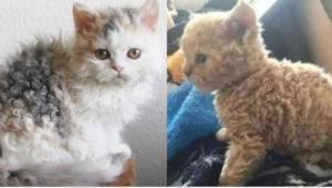 Katte har pels, men sådan en pels ser man ikke hver dag. Har I set noget lignend