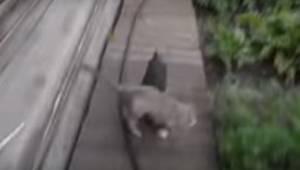 Kvinden beder hunden om at hente katten. Resultatet? Vi kan ikke stoppe med at g