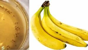 Bananfluernes værste mareridt! Her er en enkel metode, til at slippe af med dem.