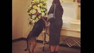 Begravelsesforretningen tillader hundene at komme indenfor og tage afsked med de