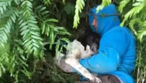 Manden bemærkede den gravide tævehund i krattet; da han redede den, skete der er