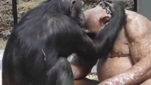Den måde på hvilken denne skaldede abe fandt kærligheden i den zoologiske have e