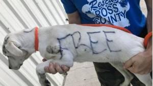 En eller anden gjorde sig fri for en skræmt hunhund i parken, og ydermere skrev