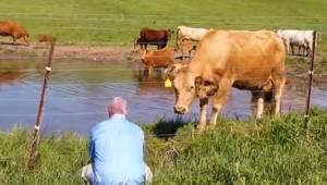 Manden var ved at filme køerne, mens de gik på engen. Pludselig opdager han, at