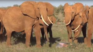 Fotografen begyndte at filme en flok elefanter, og fik en optagelse af noget sjæ