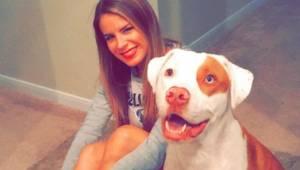 Hunden får et tragisk endeligt på grund af en simpel fejl; hundens ejer advarer