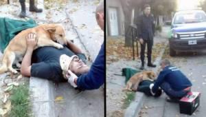 16 billeder af hunde, som viser, hvad ubetinget kærlighed betyder.