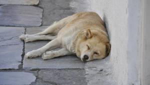 En advarsel til hundeejere. Hunden døde pludselig af hedeslag efter en spadseret