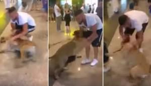 For første gang i 3 år møder hunden sit menneske. Se dens reaktion!
