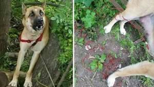 Hunden blev efterladt i skoven, og tre dage senere opdager nogle hjælpsomme menn