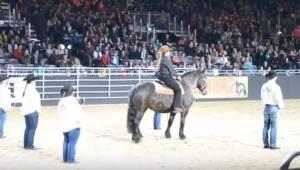 Se hvad der sker, når hestens yndlingsmelodi går i gang; dens kropsbevægelser gø