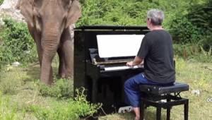 Pianisten spiller klassisk musik for den gamle og blinde elefant. Se dette røren
