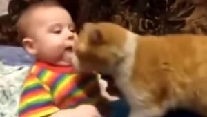 Barnet vil ikke gå i seng, så katten beslutter sig for at hjælpe på den bedst mu