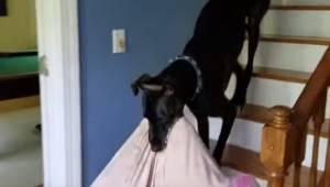 Hunden vil op til sit menneske, som ligger på sofaen og ser fjernsyn, så den med