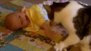 Katten i dette klip passer på et barn. Det er simpelt hen den sødeste optagelse,