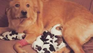 Umiddelbart inden fødslen tog de en gravid hunhund til sig. Men da de så hvalpen