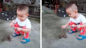 Den lille dreng er i gang med at fodre fire små fugle; drengens følsomme adfærd