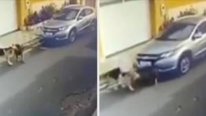 Sygeplejersken kørte bevidst to schæferhunde over med sin bil; kun den ene af de