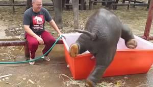 Dyrepasseren hælder vand i bassinet til den lille elefant, men det lidt ubehjælp