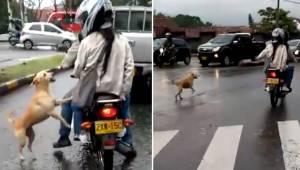 Hunden løber efter sine mennesker, for at undgå, at de efterlader den. Denne tri