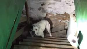 Manden købte et hus. Da han gik ned i kælderen, fandt han en hund, som var låst