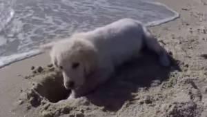 Hvalpen graver et hul i sandet; se dens geniale reaktion, da det bliver oversvøm