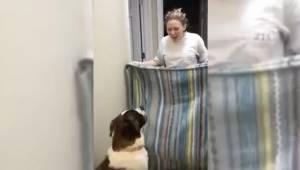 Kvinden ville vise et magisk trick for sin hund. Hun begik imidlertid en fejl, s