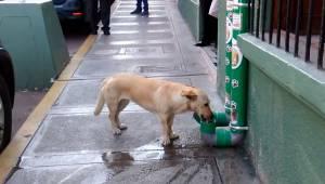 Politiet har oprettet et specielt sted, hvor hjemløse hunde kan spise og drikke.