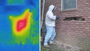 Husejeren hørte nogle underlige lyde ved væggen, men da han fjernede nogle murst