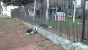 Den hjemløse hund fik hjem hos en kærlig familie. Pludselig fik den øjne på noge