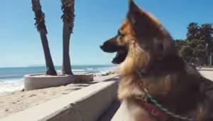 Schæferhunden tilbragte 5 år som lænkehund; nu ser den havet for første gang. Se