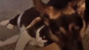 Katten elsker sin hundeven, og viser dette på den smukkest mulige måde.