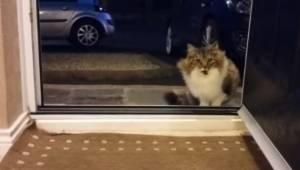 Den hjemløse kat tigger om lov til at komme indenfor; så opdager manden, at den