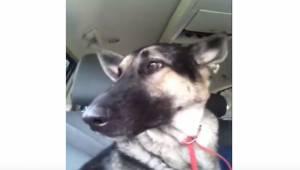 Kan man forestille sig noget mere charmerende: hunden hørte sin yndlingsmelodi,