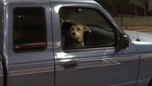 Hunden har ikke set sit menneske i 10 dage. Dens reaktion, da den hører ham, er