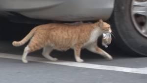 Den hjemløse kat vil ikke spise noget, hvis maden ikke befinder sig i en pose.