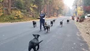 Disse dyr er blevet reddet fra skovbrandene i Californien. Se her, hvilke følels