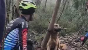 En eller anden efterlod en hund fastbunder til et træ i skoven, hvor den kunne s
