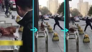 Igennem 3 timer torturerede en politibetjent en hund på gaden,  fordi han ikke ø