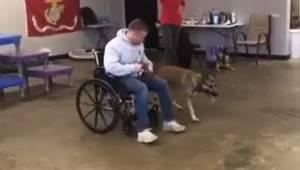 Denne hund skulle have været assistent for en person i kørestol, men det, som de