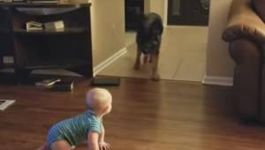 Barnet kravler hen over gulvet; så gør hunden noget helt fantastisk, for at barn