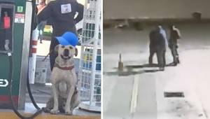 Den hjemløse hund blev adopteret af medarbejderne på en tankstation; da benzinst