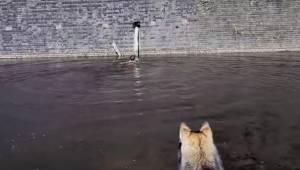 Hunden bemærkede en kat, som var i fare, og dens ejer tøvede ikke et øjeblik med
