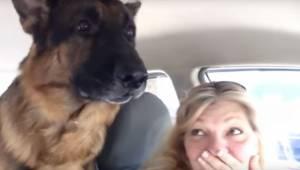 De tog schæferhunden med ud på en køretur, men se blot dens reaktion, da den fin