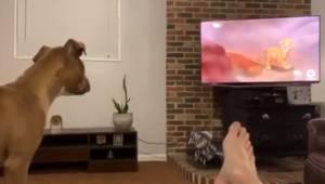 """Hunhunden ser en scene fra """"Løvernes Konge"""" og begynder sammen med Simba at græd"""